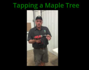 tap-tree